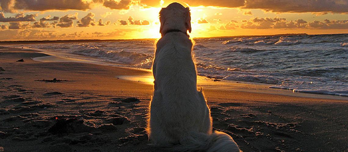 Lever ou coucher de soleil ? L'essentiel est la quiétude