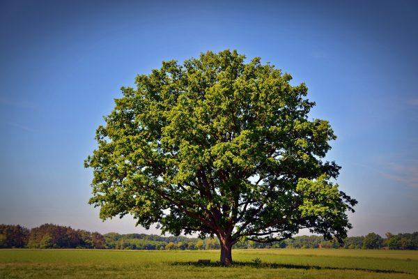 tree-2363456_1920